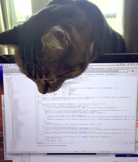 My cat, Dexter Fishpaw, dutifully watches me code.